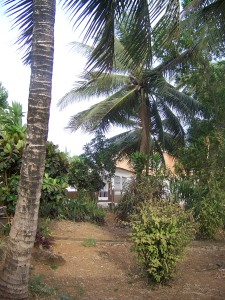 The ELCSL compound towards my house