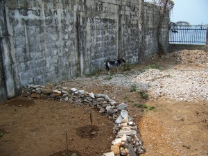 This is my herb and vegetable garden in March, during the dry season. The resident goat disappeared in April and George moved a lot of stones to clear space for cultivation in the yard.