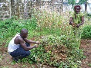 Harvest time:  uprooting and plucking peanuts became a communal effort last week, including George and Doris from the office.  At the time, we were taking advantage of some dry moments inbetween outbursts of rain.